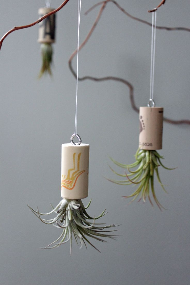 Live plant cork ornament living art unique air plant for Air plant art