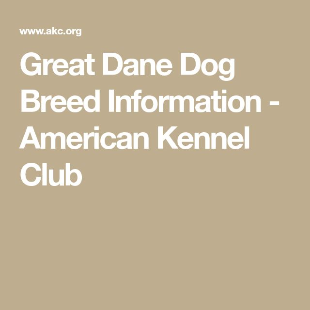 Great Dane Dog Breed Information - American Kennel Club