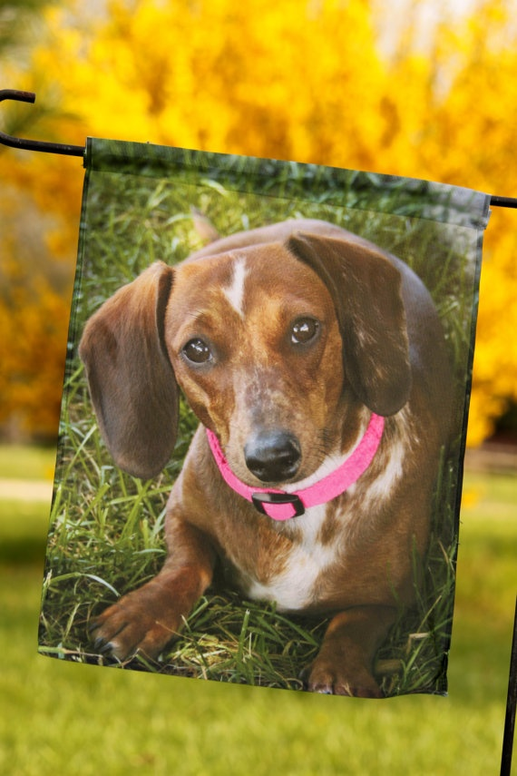 Charming 11x14 Garden Flag With Adorable Dachshund Photo By Photosbychele, $16.95
