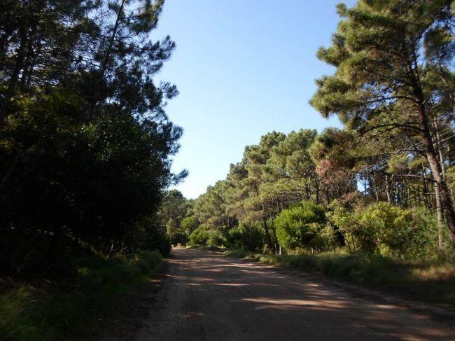 Bosque de Mar de las Pampas