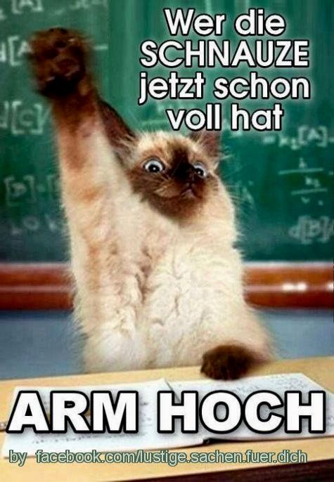funny #schwarzerhumor #ironie #lachen #witzig #zitat # – rita