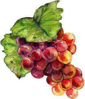 dibujos coloreados racimos de uvas