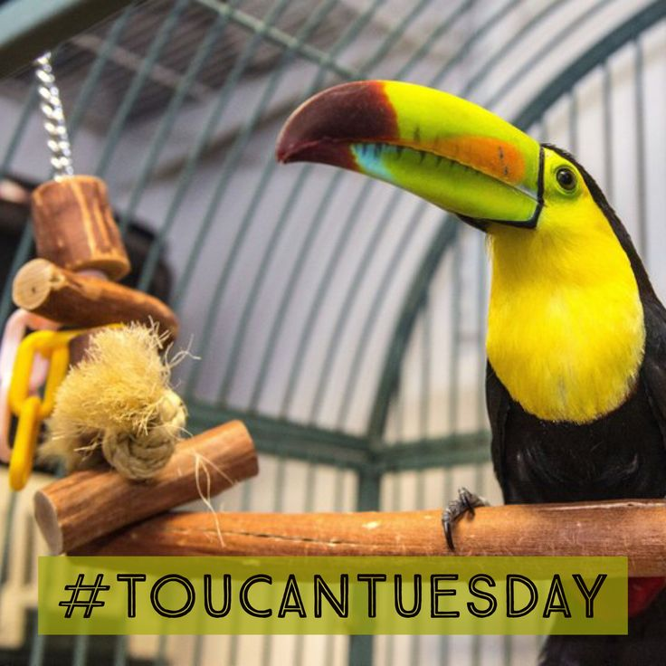Toucan Tuesday has something to play with.