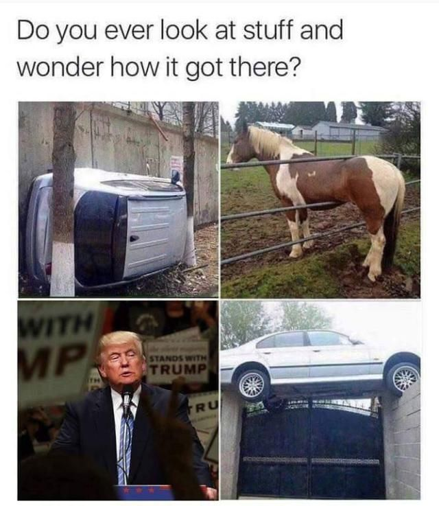 Cars in places where they shouldn't be and this horse are normal things ...... wait..... HOW DID TRUMP GET THERE