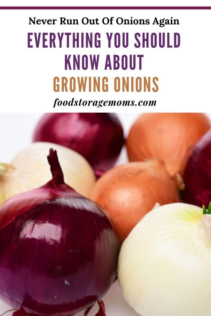 When It Comes To Growing Onions They Are Super Easy If You Desire To Grow Onions There Are Some Things Yo Growing Onions Harvest Onions Green Onions Growing