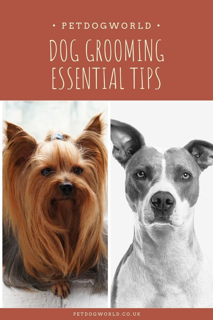 Dog Grooming Essential Tips For A Healthy Dog Dog Grooming Tips