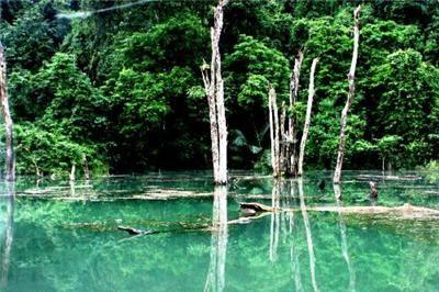 Cuc Phuong National Park - Vietnamwiki