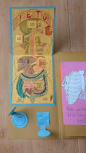 Human anatomy lapbook