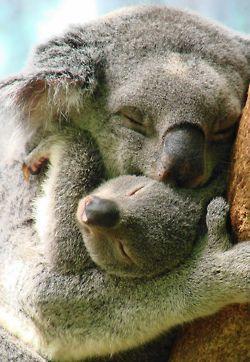 So precious, love.  Mama and baby koala.