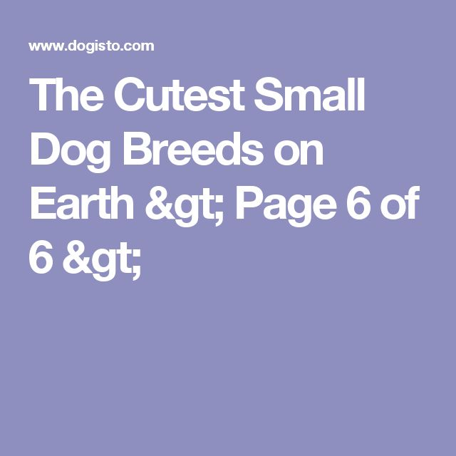 The Cutest Small Dog Breeds on Earth > Page 6 of 6 >