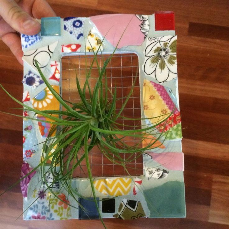 Mosaic Air Plant Frame #airplants #verticalgarden #mosaic #airplantframes