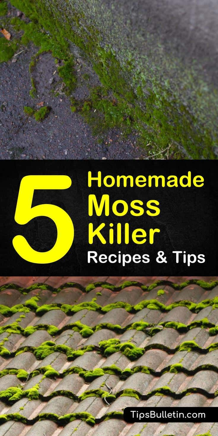 Pin On Moss Killer