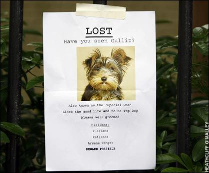 lost dog flyer examples - Vatozatozdevelopment - Lost Dog Flyer Examples