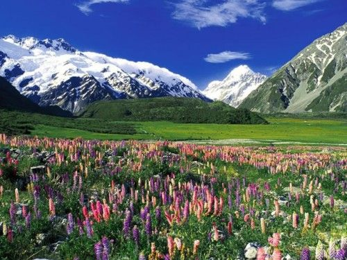 Wild Flowers in New Zealand
