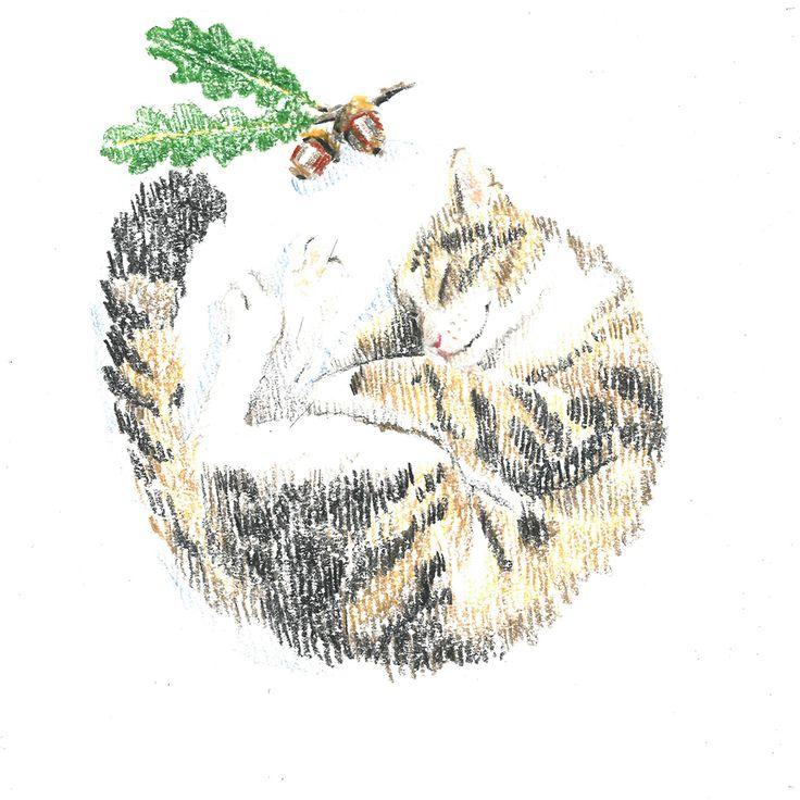motley cat, sleep, oak, acorn, сolour pencils, graphic, illustration, draw, кошка, кошка спит клубочком, дуб, желудь, графика, иллюстрация, цветные карандаши.