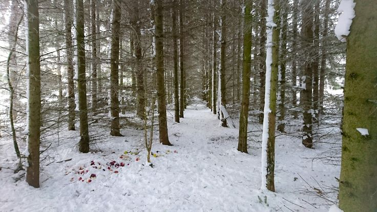 My little forest ❤️ #torshälla