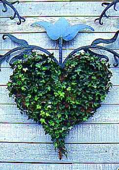 "Outdoor ""rooms"" in the garden are envlivened by living ornament, such as this heart-shaped ivy trained on wire and moss."