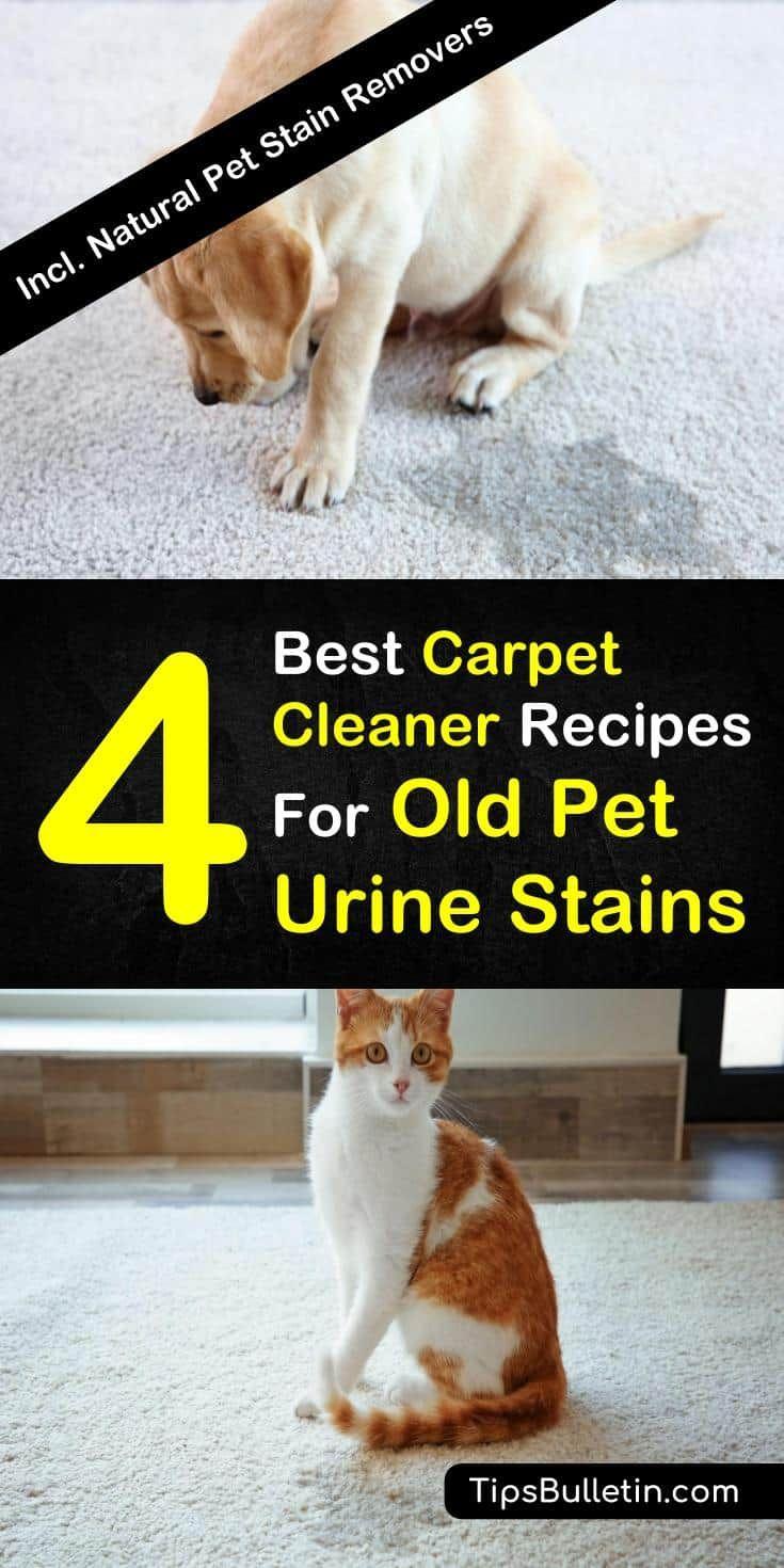 4 Best Carpet Cleaner Recipes For Old Pet Urine Stains Pet Urine Pet Carpet Cleaners Pet Stains