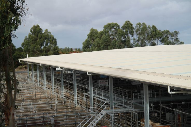 Structural steel buildings for woolsheds, covered yards and shearing sheds