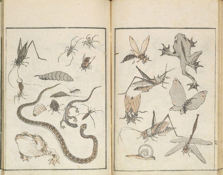 9 Key Terms You Should Know Before Seeing The Massive Hokusai Exhibition Hokusai Manga. Carnets de croquis divers de Hokusai