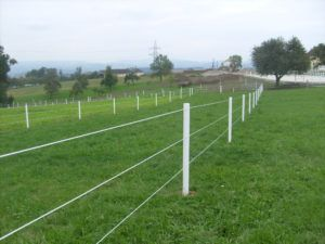 Types Of Electric Fences For Horses