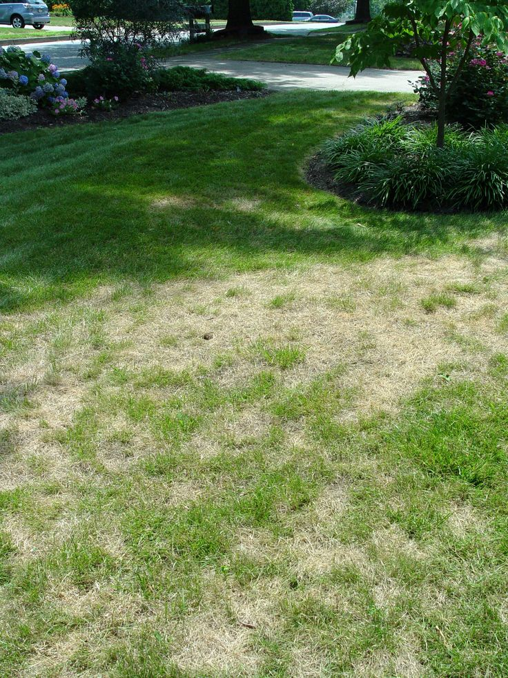 How to fix dead patches of grass did i ever mention i hate grass it 39 s so dumb green thumb for A b lawn and garden