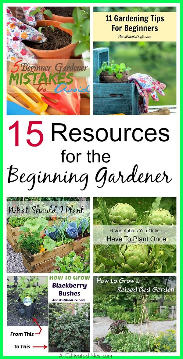 17 Best 1000 images about How To Start A Garden on Pinterest