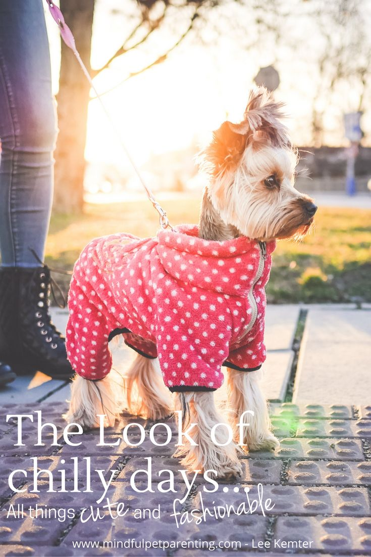 How do dog parents get to express their creativity? Well, sometimes through high fashion and cute dog clothes ...There are some really amazing DIY ideas that don't cost a lot. Like making a dog sweater from our old sweater that a moth took a bite from. My Pinterest friends are my go-to source for cool ideas on a chilly day.