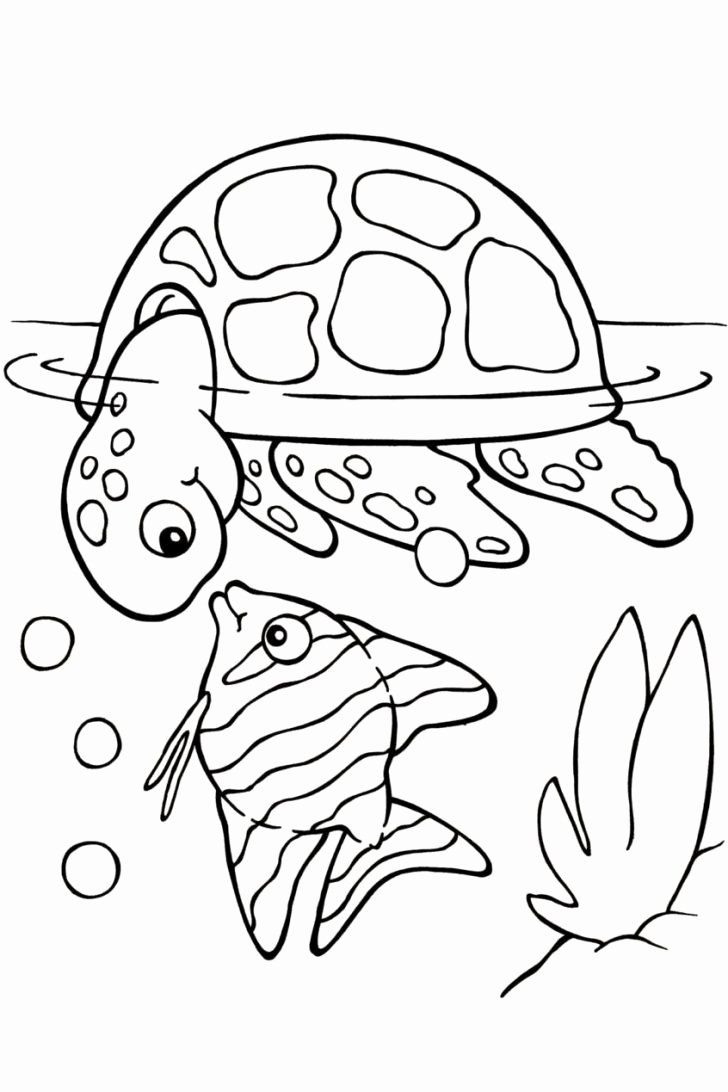 Pin by Merished on Paintings   Turtle coloring pages, Animal ...