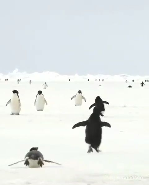 The reason I love penguins