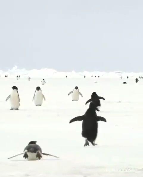 Der Grund, warum ich Pinguine liebe    – Just cute af
