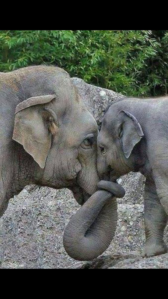 I love animals so much more than humans