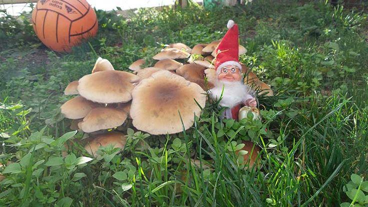 Okul bahçemizde mantar şehri. Çim ve toprak bahçe bazen masal bahçesi olur. Anaokulu bahçe oyunları