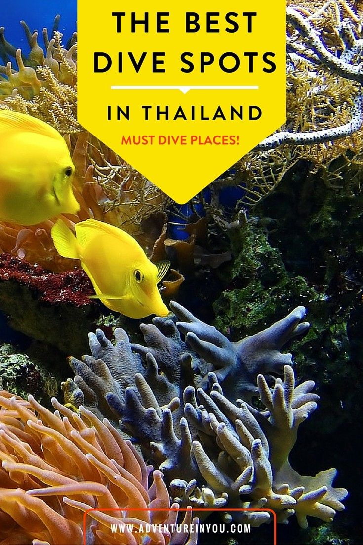 Planning to go diving in thailand? Here is your guide to some of the best dive spots in the country!