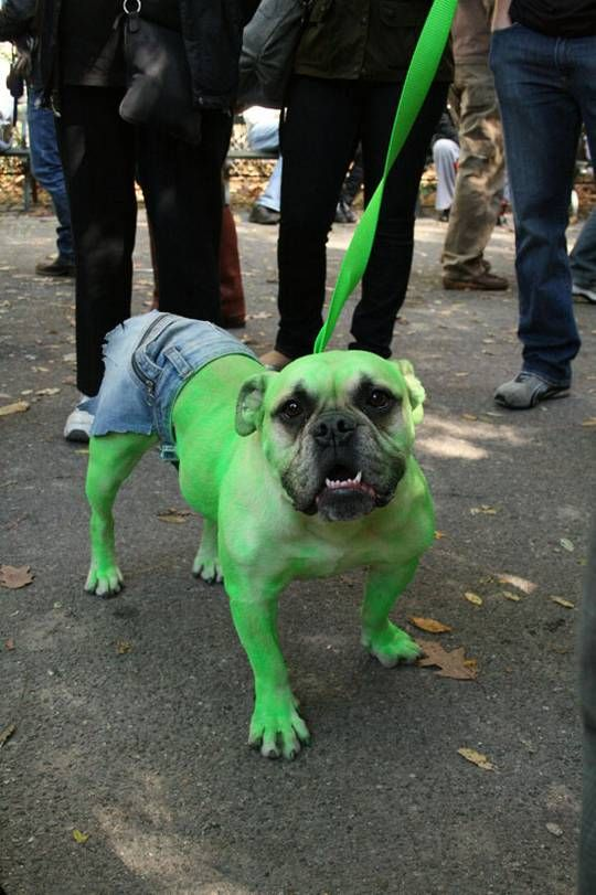 Funny+Dog+Halloween+Costumes   Funny Dogs Wearing Halloween Costumes  Fun4pic-cool, creative, funny ...