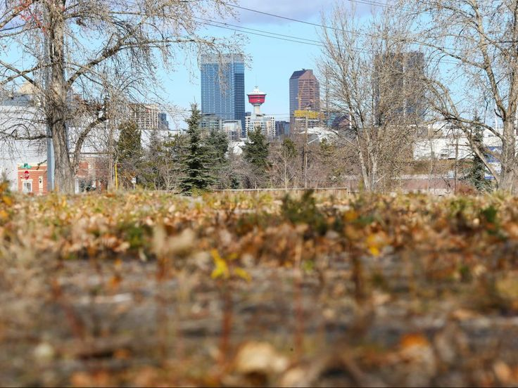 Hopes   grow for urban farming as city readies pilot project on vacant land: