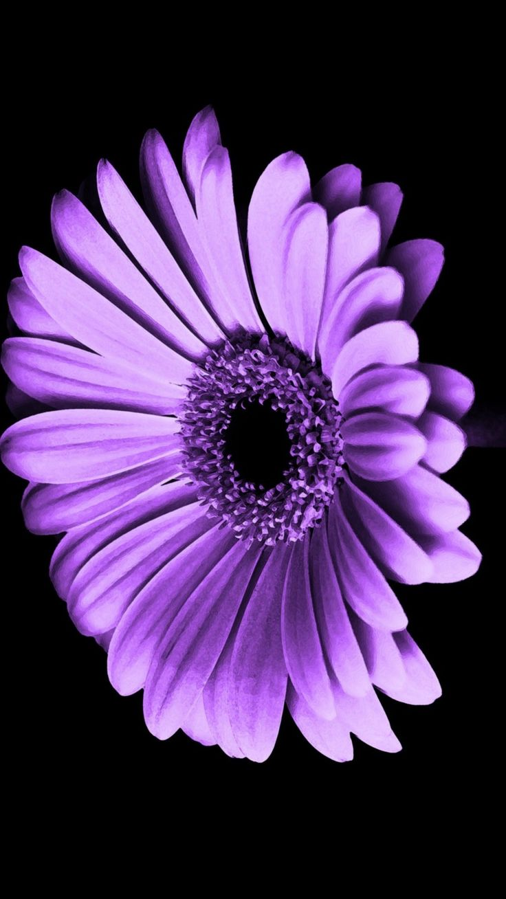 Purple Flowers iPhone Wallpaper HD Best HD Wallpapers in