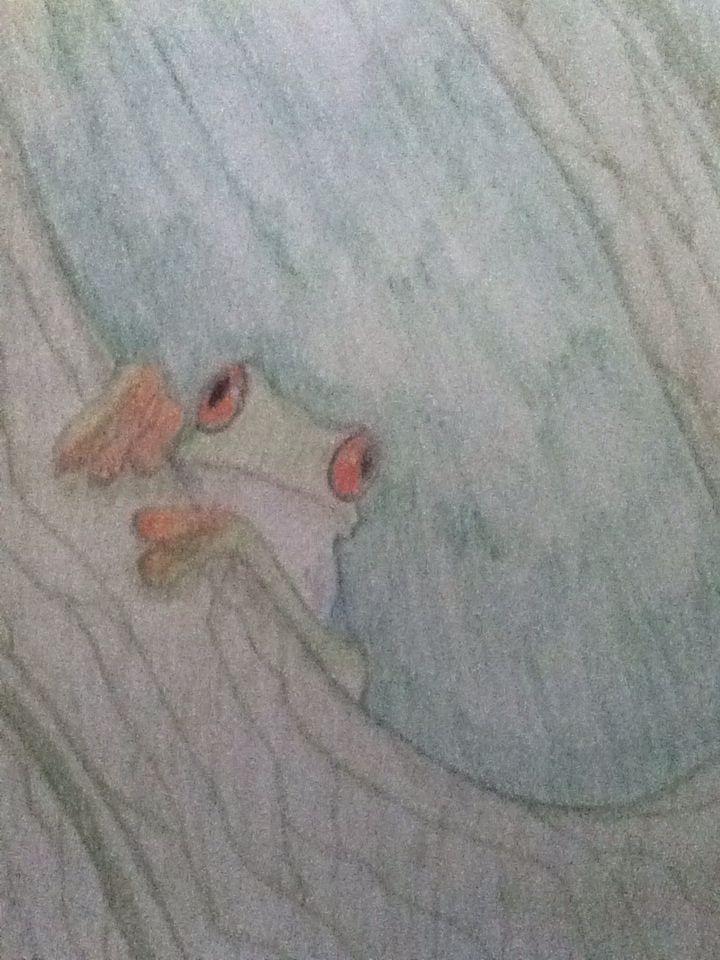 Drew a treefrog