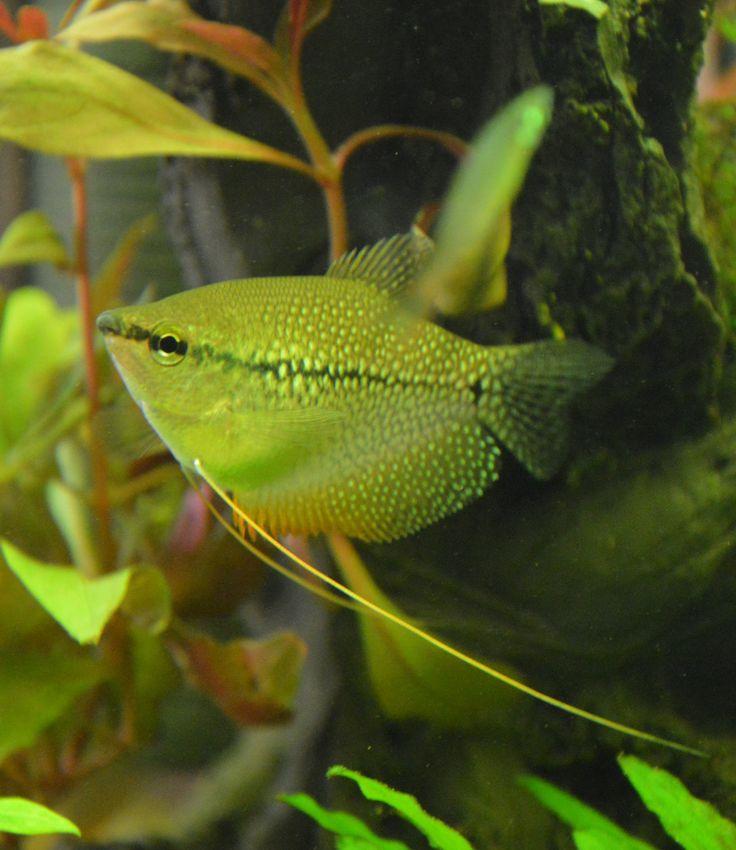 Les 25 meilleures id es de la cat gorie poissons d for Poisson tropicaux eau douce