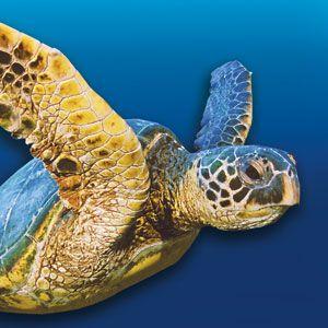 17 best ideas about new england aquarium on pinterest New england aquarium tickets