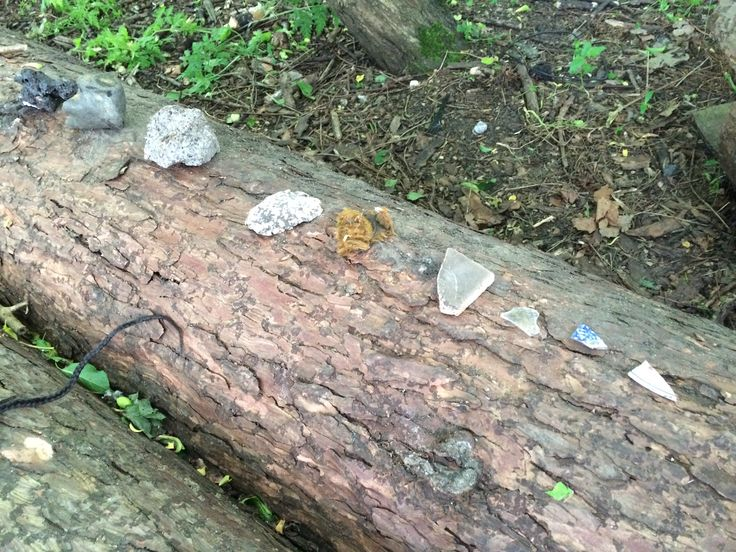 Found objects placed on log, Bethnal Green.
