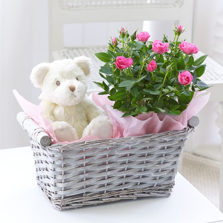 This pink rose plant is accompanied with a cuddly soft toy for a baby girl.