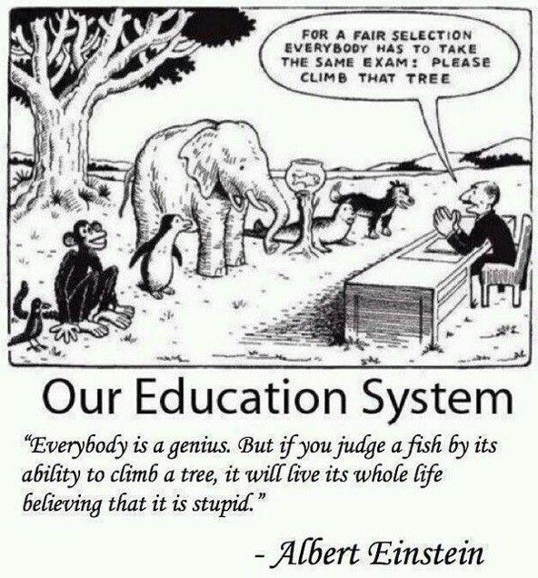 Meervoudige intelligentie
