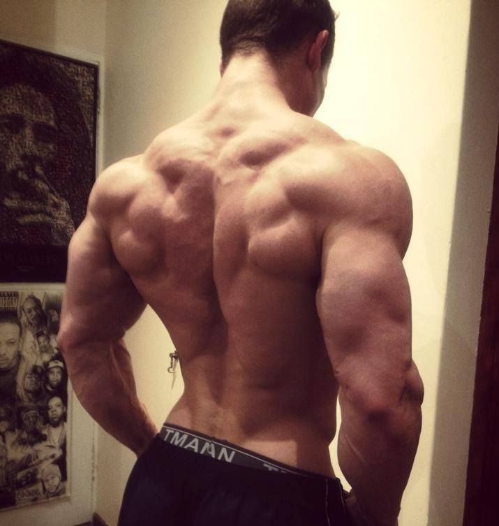 28 best Male Torso/Back anatomy images on Pinterest | Male body ...
