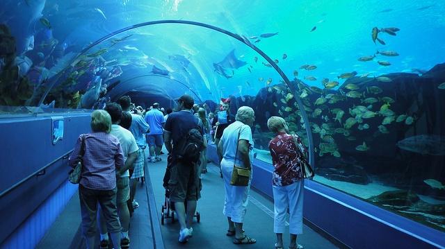 Georgia AquariumAquariums Mi Disney, Georgia Aquariums Mi