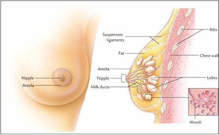 cara alami mencegah serta mengobati kanker payudara pada stadium 4 pasien akan menemukan adanya perubahan bentuk puting payudara. Bentuk puting payudara yang terkena kanker akan menjorok ke dalam. Dari puting tersebut sering keluar cairan putih yang tidak normal serta darah http://denatureherbal.wordpress.com/2014/07/28/cara-alami-mencegah-serta-mengobati-kanker-payudara/
