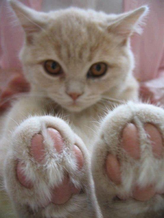 pink paw pads.
