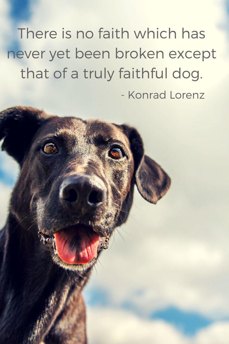 Dog Symbolism & Meaning