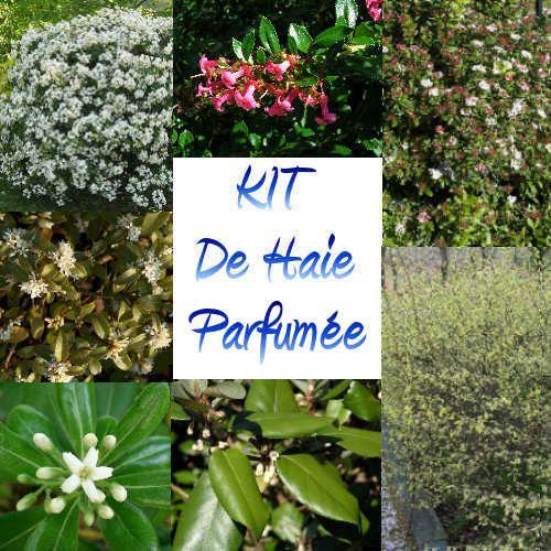 The 25 best plante pour haie ideas on pinterest arbre for Buis pour haie