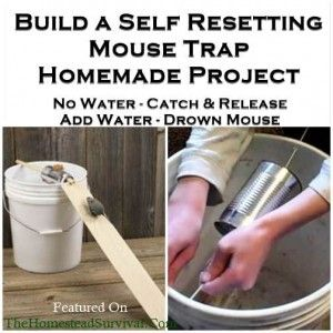 Self Resetting Mouse Trap Homemade Project - DIY Project  The Homestead Survival - Homesteading -
